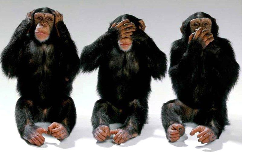 uc-maymun.jpg